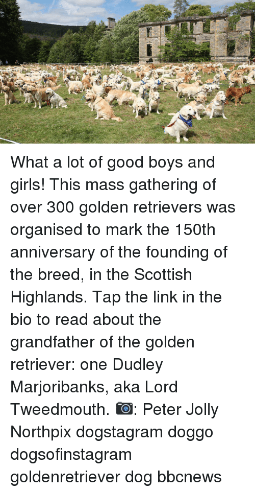 Scottish: What a lot of good boys and girls! This mass gathering of over 300 golden retrievers was organised to mark the 150th anniversary of the founding of the breed, in the Scottish Highlands. Tap the link in the bio to read about the grandfather of the golden retriever: one Dudley Marjoribanks, aka Lord Tweedmouth. 📷: Peter Jolly Northpix dogstagram doggo dogsofinstagram goldenretriever dog bbcnews