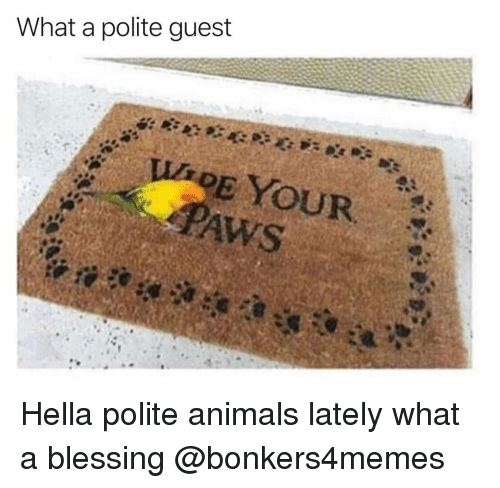 Animals, Dank Memes, and Hella: What a polite guest  PAws Hella polite animals lately what a blessing @bonkers4memes