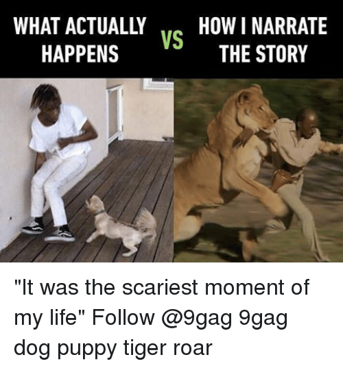 "9gag, Life, and Memes: WHAT ACTUALLY HOW NARRATE  VS  THE STORY  HAPPENS ""It was the scariest moment of my life"" Follow @9gag 9gag dog puppy tiger roar"
