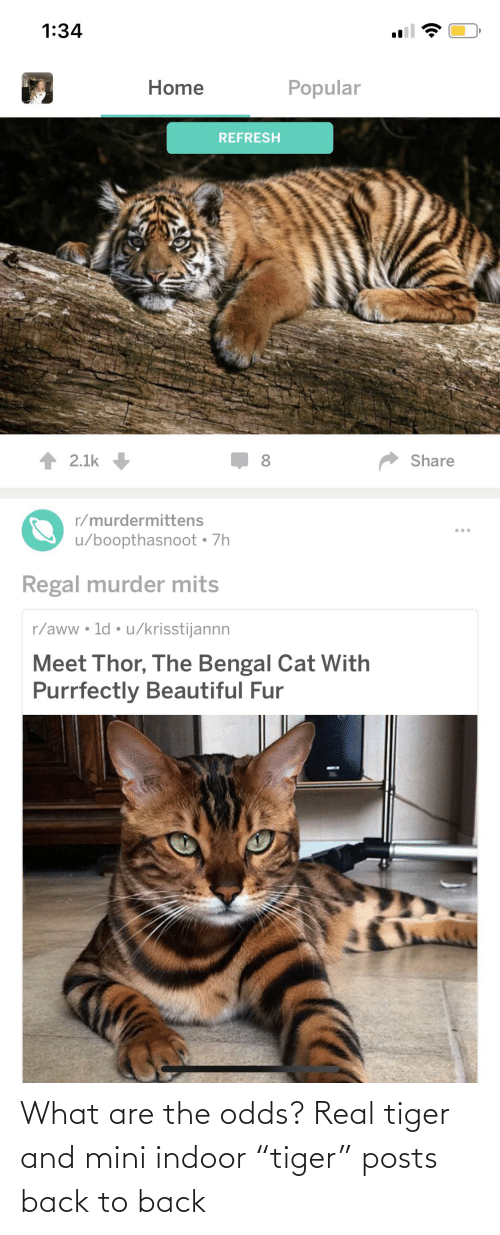 """Back to Back: What are the odds? Real tiger and mini indoor """"tiger"""" posts back to back"""