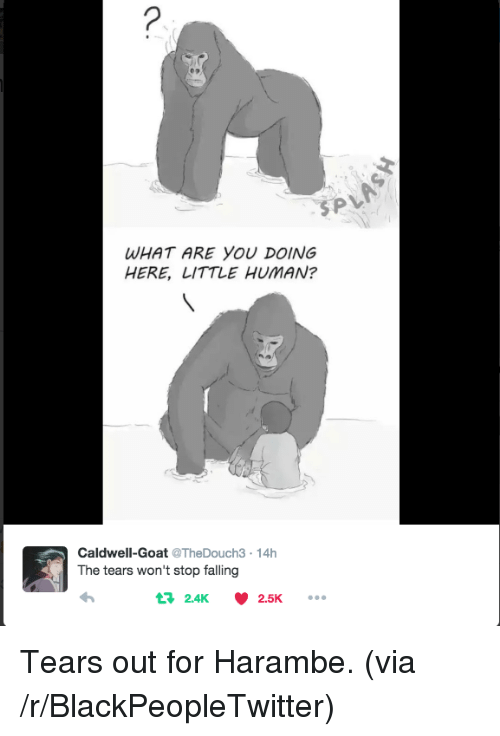 Caldwell: WHAT ARE YOU DOING  HERE, LITTLE HUMAN?  Caldwell-Goat @TheDouch3-14h  The tears won't stop falling  t 2.4K  2.5K <p>Tears out for Harambe. (via /r/BlackPeopleTwitter)</p>