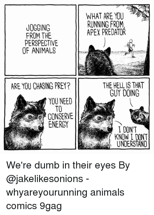 "9gag, Animals, and Dumb: WHAT ARE YOU  RUNNING FROM  APEX PREDATOR  JOGOING  FROM THE  PERSPECTIVE  OF ANIMALS  ARE YOU CHASING PREY?  THE HELL IS THAT  GUY DOING  YOU NEED  TO  CONSERVE  ENERGY  I DON""T  KNOW I DONT  UNDERSTAND We're dumb in their eyes⠀ By @jakelikesonions⠀ -⠀ whyareyourunning animals comics 9gag"