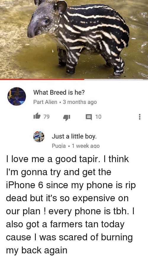 Iphone, Ironic, and Love: What Breed is he?  Part Alien 3 months ago  79  E 10  PEPS  Just a little boy  Pugia 1 week ago I love me a good tapir. I think I'm gonna try and get the iPhone 6 since my phone is rip dead but it's so expensive on our plan ! every phone is tbh. I also got a farmers tan today cause I was scared of burning my back again