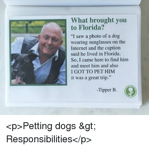"wearing sunglasses: What brought you  to Florida?  ""I saw a photo of a dog  wearing sunglasses on the  Internet and the caption  said he lived in Florida.  So, I came here to find him  and meet him and also  I GOT TO PET HIM  it was a great trip.""  -Tipper B. <p>Petting dogs &gt; Responsibilities</p>"