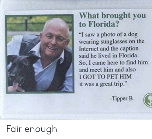 "wearing sunglasses: What brought you  to Florida?  ""I saw a photo of a dog  wearing sunglasses on the  Internet and the caption  said he lived in Florida.  So, I came here to find him  and meet him and also  I GOT TO PET HIM  it was a great trip.""  -Tipper B. Fair enough"