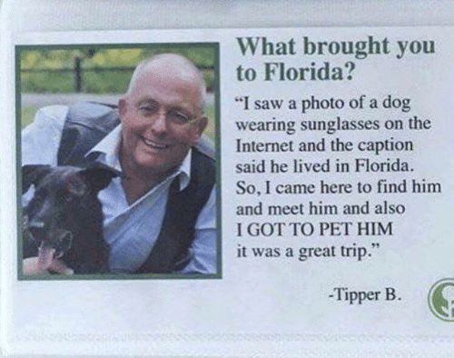 "wearing sunglasses: What brought you  to Florida?  ""I saw a photo of a dog  wearing sunglasses on the  Internet and the caption  said he lived in Florida  So, I came here to find him  and meet him and also  I GOT TO PET HIM  it was a great trip.""  -Tipper B"