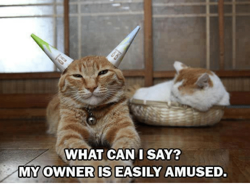 Easily Amused: WHAT CAN I SAY?  MY OWNER IS EASILY AMUSED.