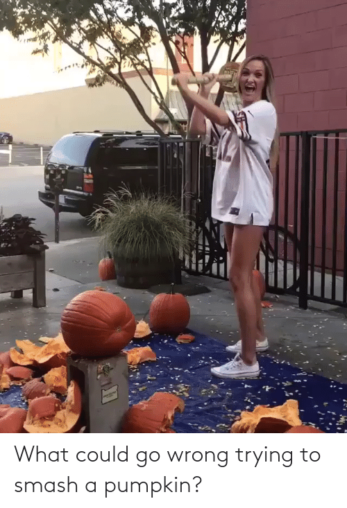 Pumpkin: What could go wrong trying to smash a pumpkin?