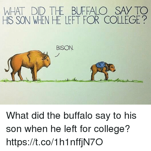 What Did The Buffalo Say To His Son When He Left For College: WHAT DID TH BUFFALO SAY TO  HIS SON WHEN HE LEFT FOR COLLEGE?  BISON What did the buffalo say to his son when he left for college? https://t.co/1h1nffjN7O
