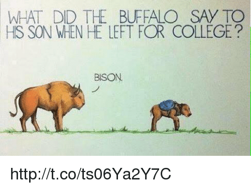 What Did The Buffalo Say To His Son When He Left For College: WHAT DID THE BUFFALO SAY TO  HIS SON WhEN HE LEFT FOR COLLEGE  BISON http://t.co/ts06Ya2Y7C