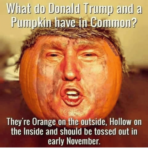 Donald Trump, Memes, and Common: What do Donald Trump and a  Pumpkin have in Common?  They're Orange on the outside, Hollow on  the Inside and should be tossed out in  early November.