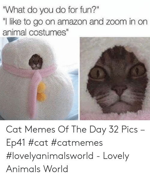 "Amazon, Animals, and Memes: ""What do you do for fun?""  ""I like to go on amazon and zoom in on  animal costumes"" Cat Memes Of The Day 32 Pics – Ep41 #cat #catmemes #lovelyanimalsworld - Lovely Animals World"