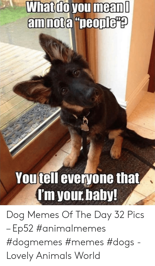 "Animals, Dogs, and Facebook: What do you mean  amnota ""people'?  facebook.comauARsoc  Youtell everyone that,  I'm your baby! Dog Memes Of The Day 32 Pics – Ep52 #animalmemes #dogmemes #memes #dogs - Lovely Animals World"