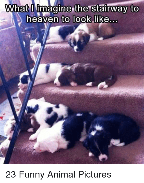 Funny, Animal, and Pictures: What I imagine the Stairway to  eaven to Took like 23 Funny Animal Pictures