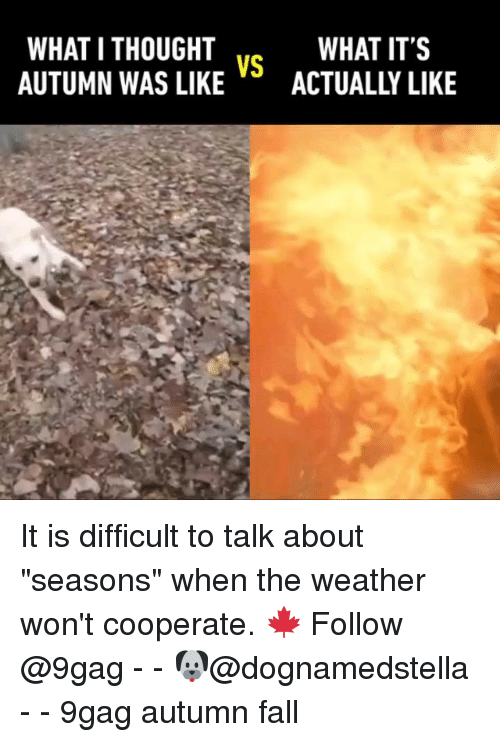 """What I Thought: WHAT I THOUGHT  AUTUMN WAS LIKEACTUALLY LIKE  WHAT IT'S  VS It is difficult to talk about """"seasons"""" when the weather won't cooperate. 🍁 Follow @9gag - - 🐶@dognamedstella - - 9gag autumn fall"""