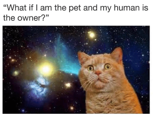 """Human, Pet, and What: """"What if I am the pet and my human is  the owner?"""""""