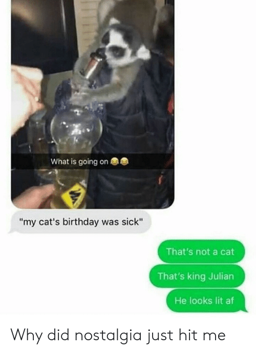 "Af, Birthday, and Cats: What is going on  ""my cat's birthday was sick""  That's not a cat  That's king Julian  He looks lit af Why did nostalgia just hit me"