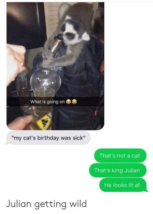 """Af, Birthday, and Cats: What is going on  """"my cat's birthday was sick""""  That's not a cat  That's king Julian  He looks lit af Julian getting wild"""