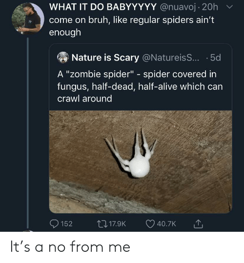 "crawl: WHAT IT DO BABYYYYY @nuavoj 20h  come on bruh, like regular spiders ain't  enough  Nature is Scary @Natureis... .5d  A ""zombie spider"" - spider covered in  fungus, half-dead, half-alive which can  crawl around  L17.9K  152  40.7K It's a no from me"