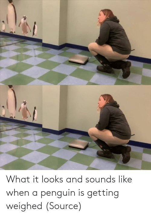 Getting: What it looks and sounds like when a penguin is getting weighed (Source)