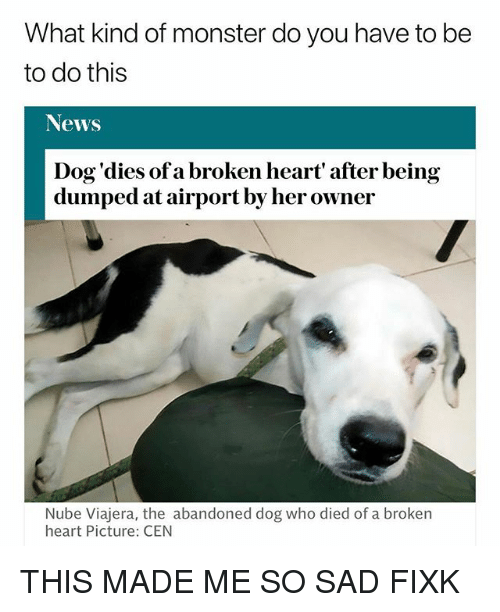 Memes, Monster, and News: What kind of monster do you have to be  to do this  News  Dog'dies of a broken heart' after being  dumped at airport by her owner  Nube Viajera, the abandoned dog who died of a broken  heart Picture: CEN THIS MADE ME SO SAD FIXK