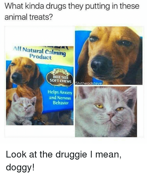 Calming: What kinda drugs they putting in these  animal treats?  All Natural Calming  Product  BITE SIZE  SOFT CHEWS Shitheadsteve  Helps Anxiety  and Nervous  Behavior Look at the druggie I mean, doggy!