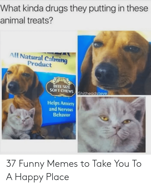 Drugs, Funny, and Memes: What kinda drugs they putting in these  animal treats?  All Natural Calming  Product  BITE SIZE  SOFT CHEWS Shitheadsteve  Helps Anxiety  and Nervous  Behavior 37 Funny Memes to Take You To A Happy Place