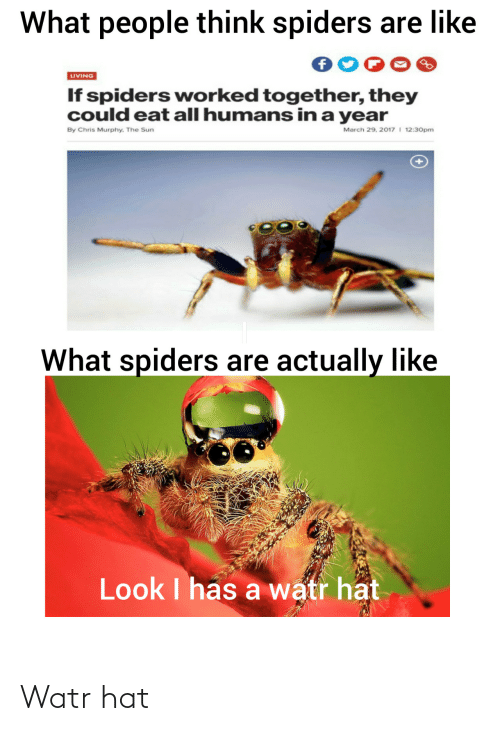 march: What people think spiders are like  LIVING  If spiders worked together, they  could eat all humans in a year  March 29, 2017 I 12:30pm  By Chris Murphy. The Sun  What spiders are actually like  Look I has a watr hat Watr hat