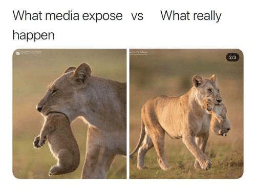 expose: What really  What media expose vs  happen  MOMENTS OF MAD  MENTS OF MAGIC  2/3