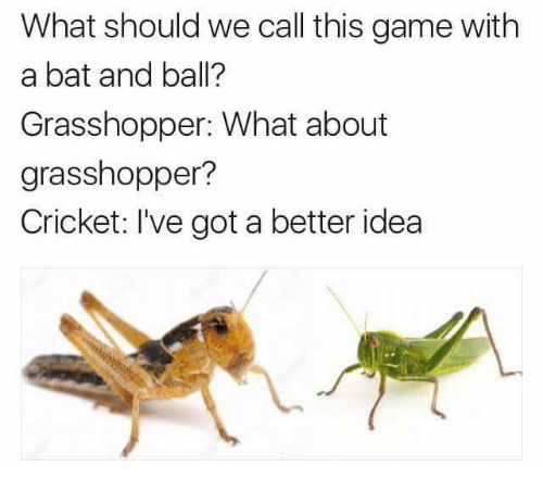 Ive Got A Better Idea: What should we call this game with  a bat and ball?  Grasshopper: What about  grasshopper?  Cricket: I've got a better idea