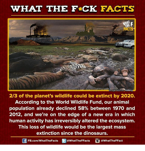 Dank, Dinosaur, and Dinosaurs: WHAT THE FCK FACTS  FACTS  mage Source history  2/3 of the planet's wildlife could be extinct by 2020.  According to the World Wildlife Fund, our animal  population already declined 58% between 1970 and  2012, and we're on the edge of a new era in which  human activity has irreversibly altered the ecosystem  This loss of wildlife would be the largest mass  extinction since the dinosaurs.  FB.com/WhatThe Facts  @WhatTheFFacts  @WhatTheFFact