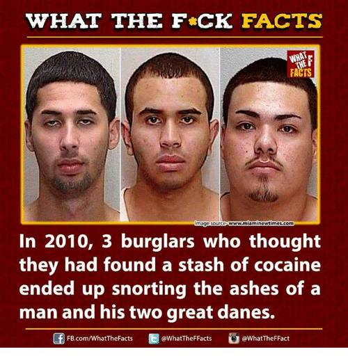 Cocaines: WHAT THE FCK FACTS  FACTS  w.miaminewtimes.com  mage Source  In 2010, 3 burglars who thought  they had found a stash of cocaine  ended up snorting the ashes of a  man and his two great danes.  Ed WhatTheFFacts  @WhatTheF Fact  FB.com/What'TheFacts