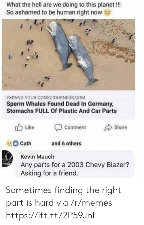 Memes, Chevy, and Germany: What the hell are we doing to this planet!!!  So ashamed to be human right now  EXPAND-YOUR-CONSCIOUSNESS.COM  Sperm Whales Found Dead In Germany,  Stomachs FULL Of Plastic And Car Parts  Like  Comment  Share  Cath  and 6 others  Kevin Mauch  Any parts for a 2003 Chevy Blazer?  Asking for a friend Sometimes finding the right part is hard via /r/memes https://ift.tt/2P59JnF
