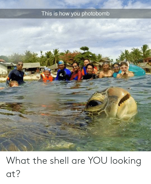 Looking At: What the shell are YOU looking at?
