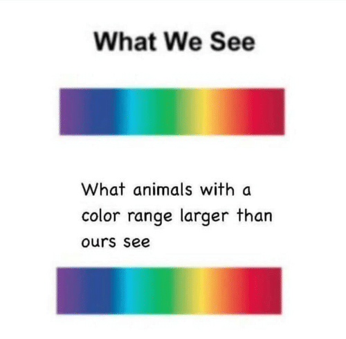 color: What We See  What animals with a  color range larger than  ours see