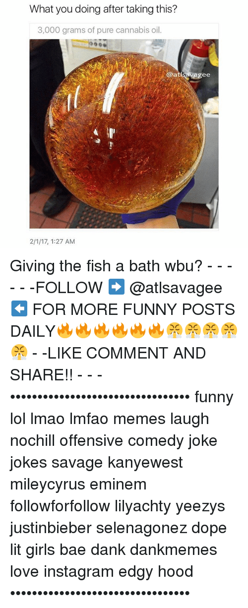 Cannabies: What you doing after taking this?  3,000 grams of pure cannabis oil.  @atlsavagee  2/1/17, 1:27 AM Giving the fish a bath wbu? - - - - - -FOLLOW ➡️ @atlsavagee ⬅️ FOR MORE FUNNY POSTS DAILY🔥🔥🔥🔥🔥🔥😤😤😤😤😤 - -LIKE COMMENT AND SHARE!! - - - ••••••••••••••••••••••••••••••••• funny lol lmao lmfao memes laugh nochill offensive comedy joke jokes savage kanyewest mileycyrus eminem followforfollow lilyachty yeezys justinbieber selenagonez dope lit girls bae dank dankmemes love instagram edgy hood •••••••••••••••••••••••••••••••••