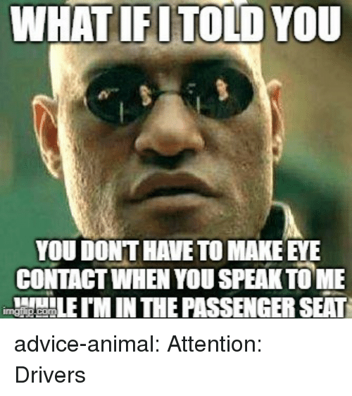 Advice, Tumblr, and Animal: WHATIFUTOLD YOU  YOU DONT HAVE TO MAKE EYE  CONTAGT WHEN YOU SPEAK TOME  M IN THE PASSENGER SEAT advice-animal:  Attention: Drivers