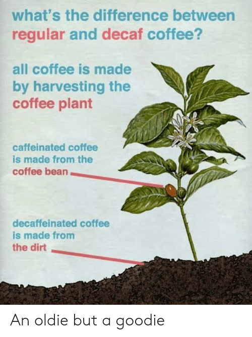Coffee, Coffee Bean, and Dirt: what's the difference between  regular and decaf coffee?  all coffee is made  by harvesting the  coffee plant  caffeinated coffee  is made from the  coffee bean  decaffeinated coffee  is made from  the dirt An oldie but a goodie