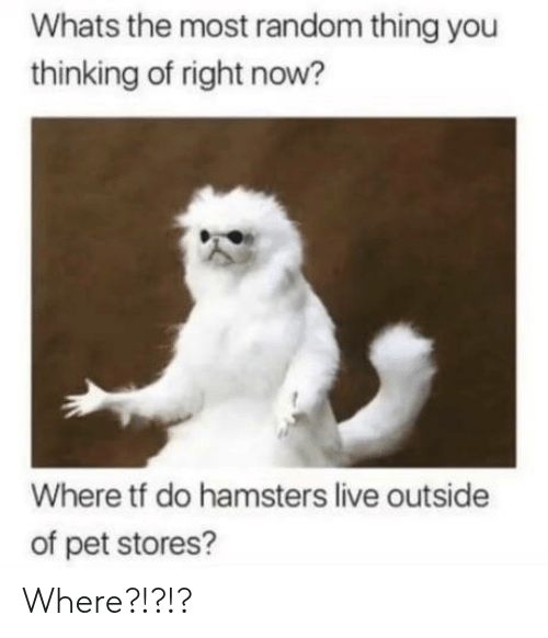Live, Random, and Pet: Whats the most random thing you  thinking of right now?  Where tf do hamsters live outside  of pet stores? Where?!?!?