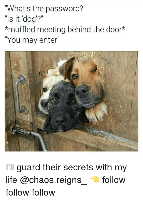 """follow-follow-follow: """"What's the password?  """"Is it dog'?""""  *muffled meeting behind the door  """"You may enter"""" I'll guard their secrets with my life @chaos.reigns_ 👈 follow follow follow"""