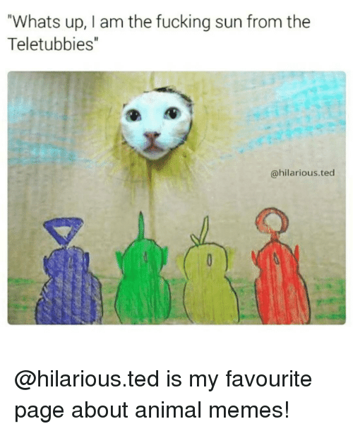 "Animals Memes: Whats up, I am the fucking sun from the  Teletubbies""  @hilarious ted @hilarious.ted is my favourite page about animal memes!"