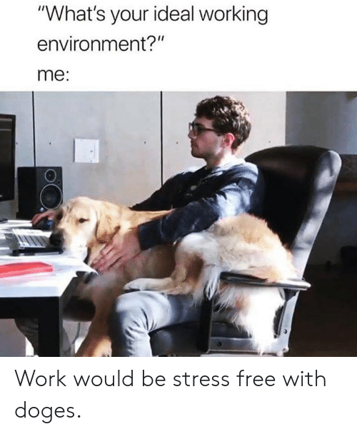 "doges: ""What's your ideal working  environment?""  me: Work would be stress free with doges."