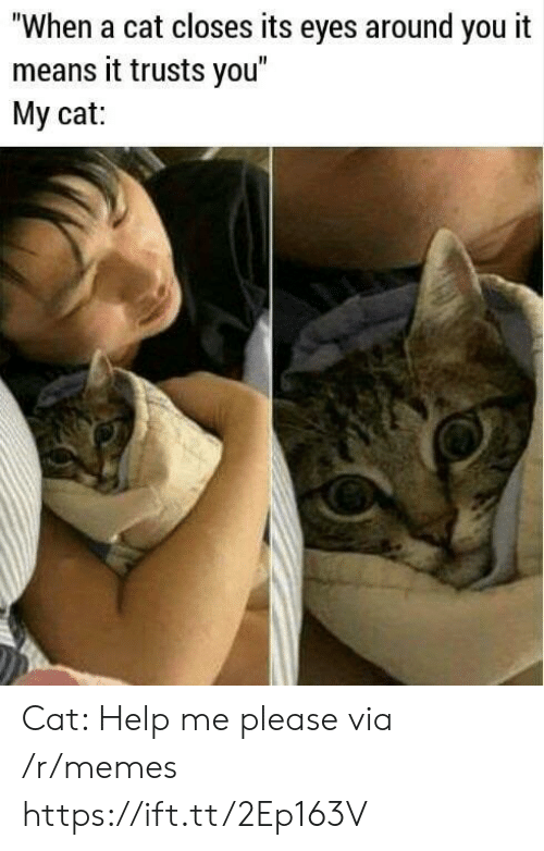 """Memes, Help, and Cat: """"When a cat closes its eyes around you it  means it trusts you  My cat: Cat: Help me please via /r/memes https://ift.tt/2Ep163V"""