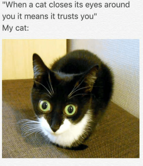 """Memes, 🤖, and Cat: """"When a cat closes its eyes around  you it means it trusts you""""  My cat:"""