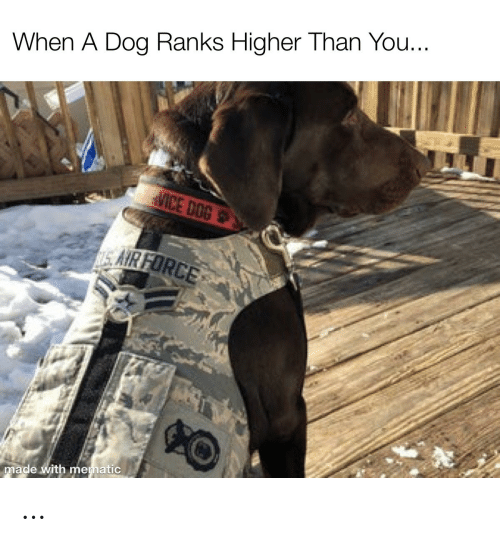 Sair: When A Dog Ranks Higher Than You...  MICE DOG  SAIR FORCE  made with mematic …