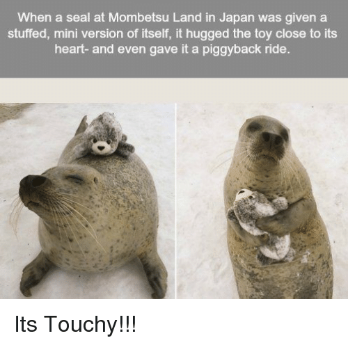 Touchy: When a seal at Mombetsu Land in Japan was given a  stuffed, mini version of itself, it hugged the toy close to its  heart- and even gave it a piggyback ride. Its Touchy!!!
