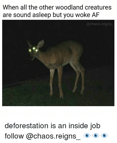 deforestation: When all the other woodland creatures  are sound asleep but you woke AF  chaos reigns deforestation is an inside job follow @chaos.reigns_ 👁👁👁