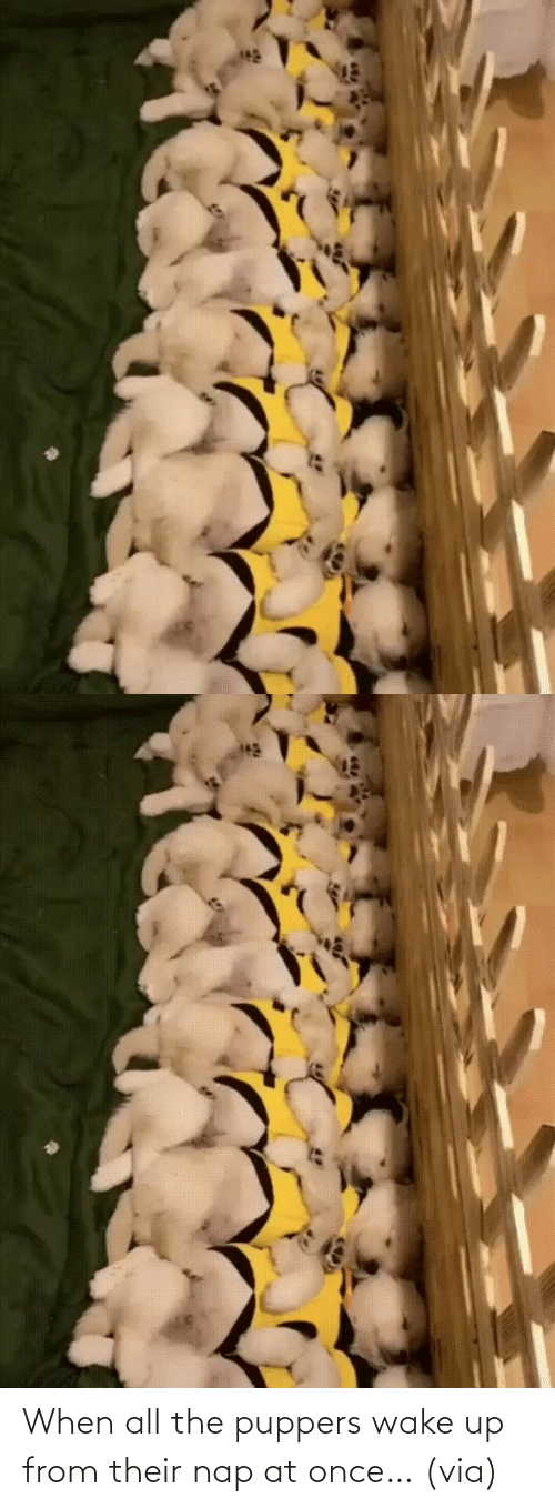 once: When all the puppers wake up from their nap at once… (via)