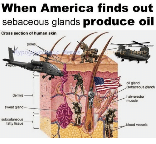 America, Cross, and Hair: When America finds out  sebaceous glands produce oil  Cross section of human skin  pores  уро  ep  oil gland  (sebaceous gland)  dermis  hair-erector  muscle  sweat gland  subcutaneous  fatty tissue  blood vessels