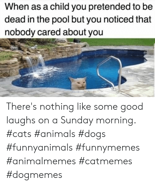 About You: When as a child you pretended to be  dead in the pool but you noticed that  nobody cared about you There's nothing like some good laughs on a Sunday morning.  #cats #animals #dogs #funnyanimals #funnymemes #animalmemes #catmemes #dogmemes